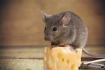 Сlipart Mousetrap Risk Mouse Humor Danger Animal   BillionPhotos
