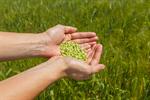 Сlipart Wheat Crop Human Hand Seed Harvesting photo  BillionPhotos