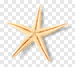 Сlipart white starfish sea mollusk isolated photo cut out BillionPhotos