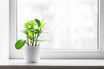 Сlipart window sill clean houseplant decoration photo  BillionPhotos