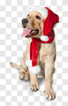 Сlipart pet dog animal white holiday photo cut out BillionPhotos