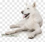 Сlipart Dog Currency Pets Animal Dollar photo cut out BillionPhotos