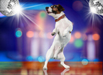 Сlipart dog dancing dance animal fun   BillionPhotos