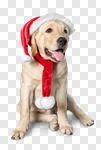 Сlipart dog pet animal white holiday photo cut out BillionPhotos