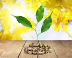 Сlipart biomass pellets wood plant fuel   BillionPhotos