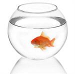 Сlipart Fish Goldfish Fishbowl Gold Fish Tank photo  BillionPhotos