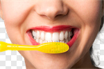 Сlipart Human Teeth Toothbrush Smiling Dental Hygiene Brushing photo cut out BillionPhotos