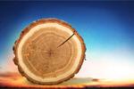 Сlipart Tree Ring Log Wood Tree Trunk Tree   BillionPhotos