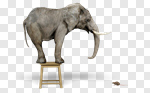 Сlipart Elephant Animal Fear Animal Themes Terrified 3d cut out BillionPhotos