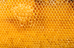 Сlipart Honey Honeycomb Macro Raw Wax photo  BillionPhotos