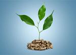 Сlipart biomass pellets wood plant photography   BillionPhotos